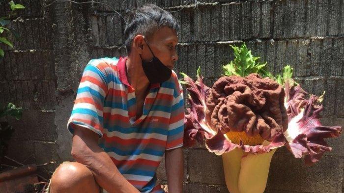 Berita Foto : Penampakan Mirip Bunga Bangkai di Cipete Selatan yang Gegerkan Warga