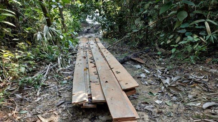 Ilustrasi: Tumpukan kayu diduga hasil illegal logging yang ditemukan oleh peserta Jungle Trek Rimbang Baling, Minggu (14/7/2019).