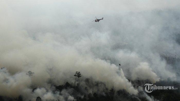 8 Fakta Mengerikan Dampak Kebakaran Hutan 2015 di Jambi