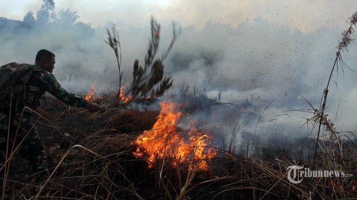 Indonesia Terancam Alami Kekeringan, Berikut Daerah yang Masuk Status Awas dan Waspada