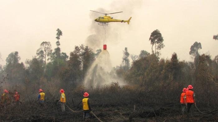 Kebakaran Hutan serta Lahan di Provinsi Riau Perlu Respon Cepat Pemerintah Daerah