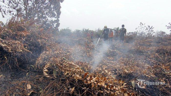 Petugas gabungan memadamkan api yang masih menyala di lokasi kebakaran lahan gambut di Desa Giri Purwa, Petung, Penajam Paser Utara, Kalimantan Timur, Selasa (17/9/2019). Meskipun sudah sembilan hari ditangani, namun api di beberapa titik di lokasi seluas 110 hektar ini menyala kembali. Tribun Kaltim/Fachmi Rachman