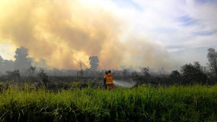 Diduga Gara-gara Puntung Rokok, Dua Hektar Lahan di Rumbai Terbakar