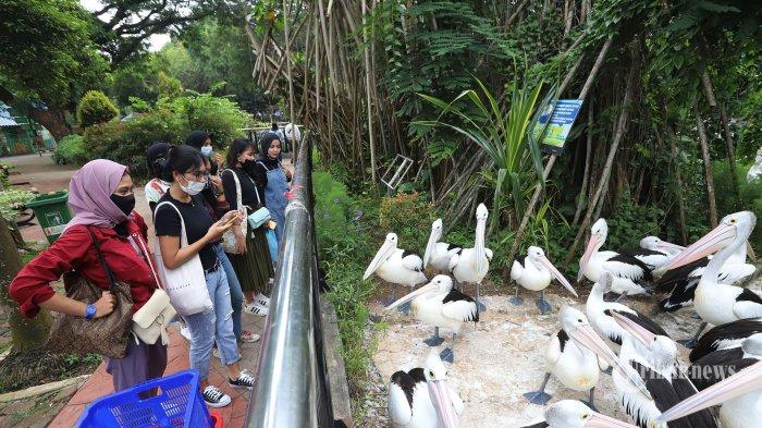 Hingga Pukul 10.30 WIB, Jumlah Pengunjung Taman Margasatwa Ragunan Capai 7.536 Pengunjung