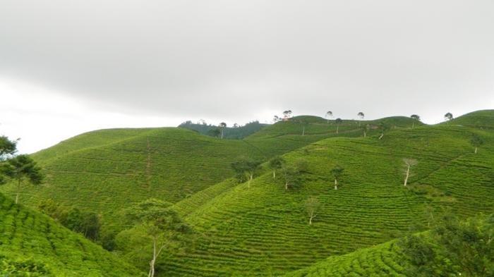 Desa Kemuning Karanganyar Torehkan Prestasi, Masuk 20 Finalis Desa Wisata Award 2021