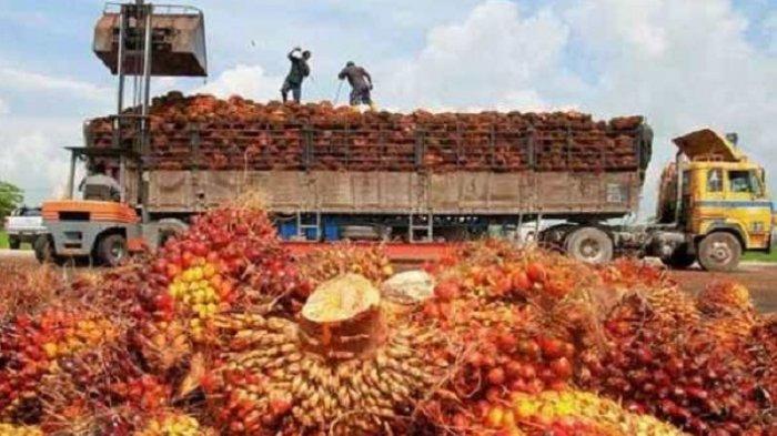 Industri Kelapa Sawit Tidak Hanya Seputar Minyak Goreng dan CPO