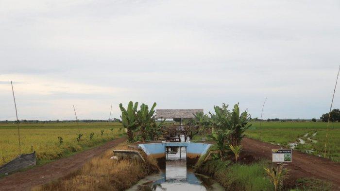 Petani: Tidak Betul Food Estate Kalteng Gagal Panen