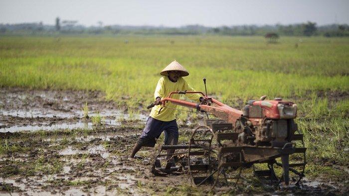 Genjot Produktivitas, Kementan Berikan Petani Lampung Alsintan