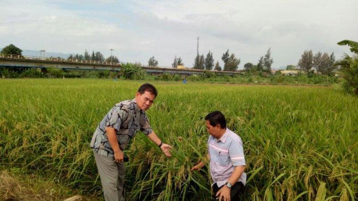 Petani Berharap Jokowi - Amin Pertahankan Prestasi Pertanian