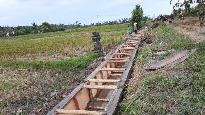 Kementan Laksanakan Kegiatan RJIT di Wilayah Bali Seluas 5.245 ha