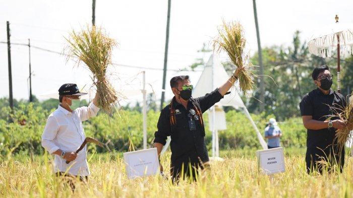 Gairahkan Perekonomian, Mentan SYL Kembangkan Agrowisata Sawah