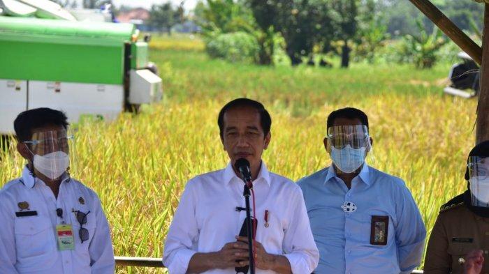 Jika Hasil Panen Bagus, Jokowi Sebut Tak Ada Impor Beras Hingga Akhir Tahun