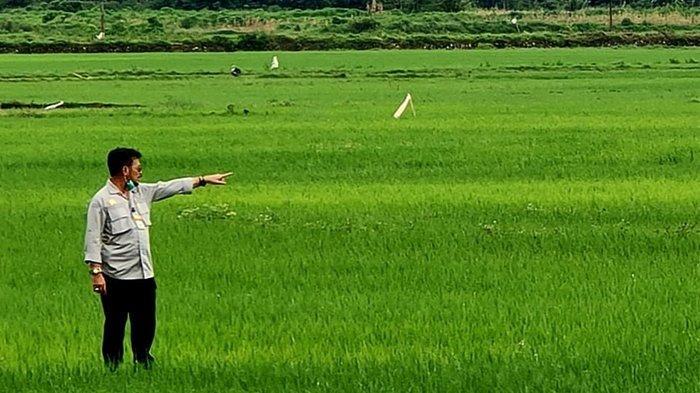 Anggaran untuk Impor Beras Sebaiknya Dialokasikan Membeli Beras dari Petani dan Lahan Food Estate