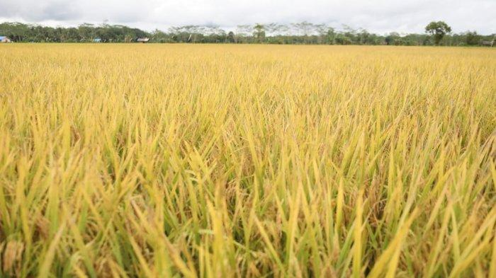 Kabupaten Sinjai dan Jasindo MoU Asuransi Pertanian dan Peternakan