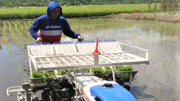 Pertanian di Sumba Tengah Dimaksimalkan dengan Bantuan Alsintan