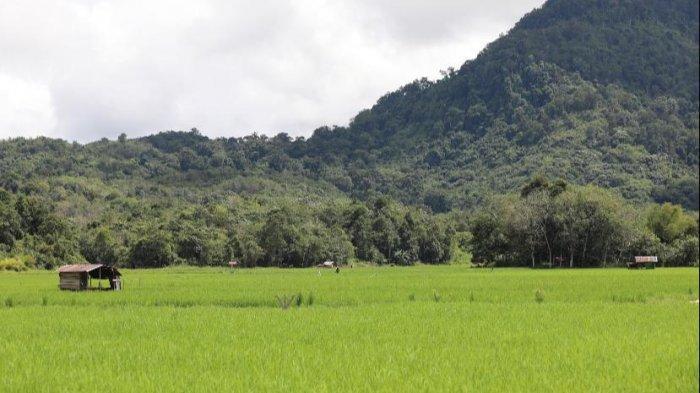 Ekonom Senior Rizal Ramli dan Emil Salim Mengapresiasi Pertumbuhan Sektor Pertanian