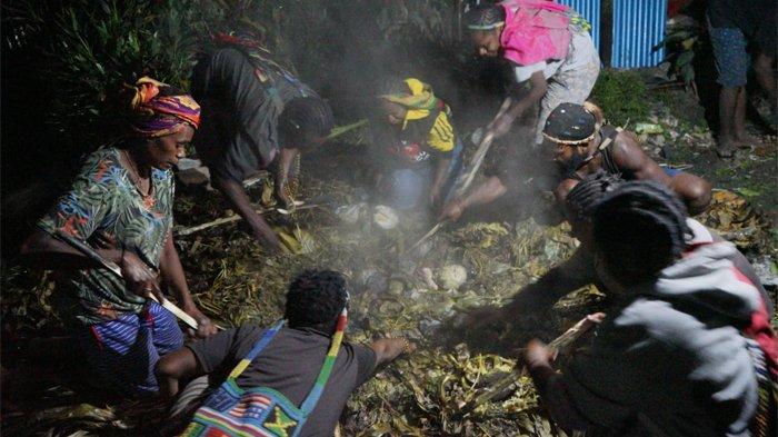 Selamat dari Serangan KKB di Beoga, Kepala Suku Dambet Bakar Batu Sebagai Ungkapan Rasa Syukur