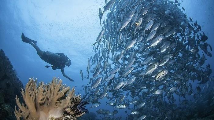 Keseruan diving di Raja Ampat.