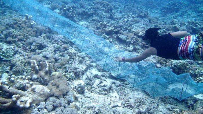 Pulau Ambalau Maluku.