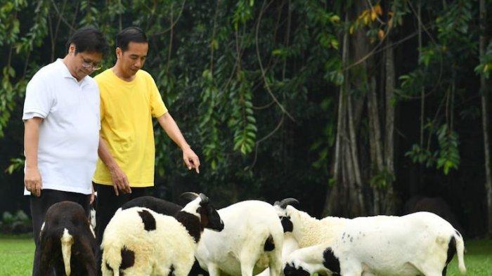 Jawaban Jokowi Saat Disinggung Seberapa Cocok Airlangga Jadi Cawapres