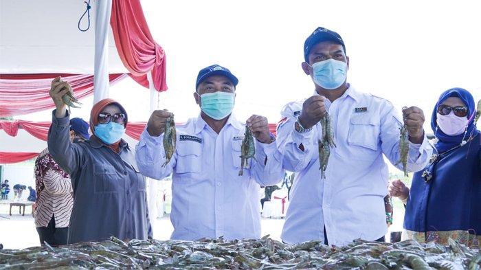Panen Perdana, Tambak Udang Berkelanjutan KKP Hasilkan Udang Berkualitas Ekspor