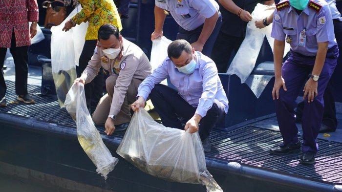 KKP Selamatkan 215 Ekor Ikan Dilindungi yang Diperoleh dari Hasil Gelar Operasi