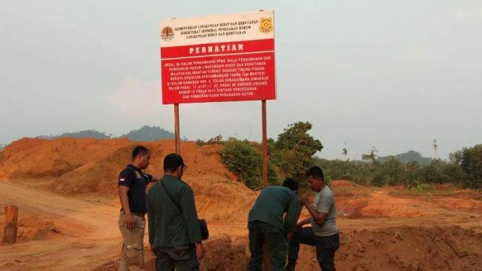 KLHK Gerebek Tambang di Habitat Orangutan Sungai Tulak  Ketapang