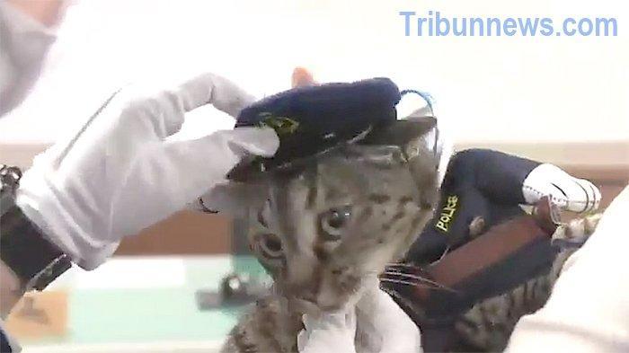 Kucing Koko-chan Dapat Penghargaan dari Polisi Jepang Setelah Selamatkan Seorang Kakek