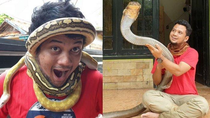 Kolase foto Panji Petualang bersama ular peliharaannya.