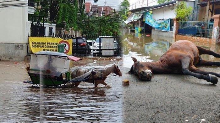Viral! Nekat Terobos Banjir Seeekor Kuda Mati, Sang Kusir Pingsan Hingga Dilarikan ke Rumah Sakit