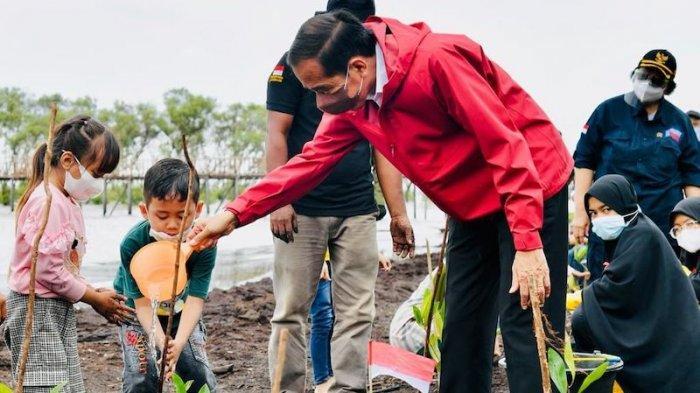 Komitmen Paris Agreement, Jokowi Perintahkan Rehabilitasi Mangrove 34 Ribu Hektar