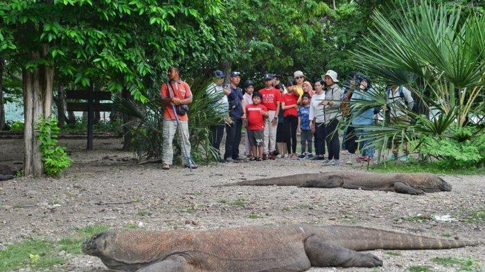 Merindukan dan Menjaga Komodo yang Mendunia