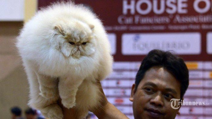 WHO Sebut Ada Kemungkinan Penularan Covid-19 Dari Manusia ke Kucing dan Anjing