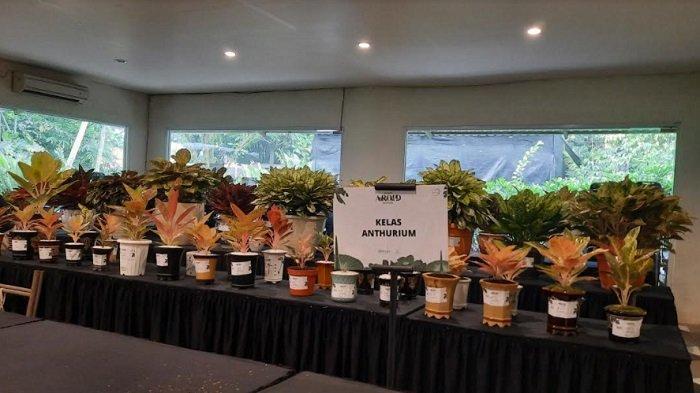 Kontes tanaman hias 9345