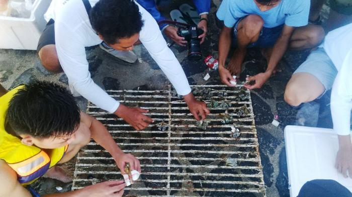 Balai Karantina Provinsi Bali Amankan 440 Koral Selundupan Dari Sumbawa