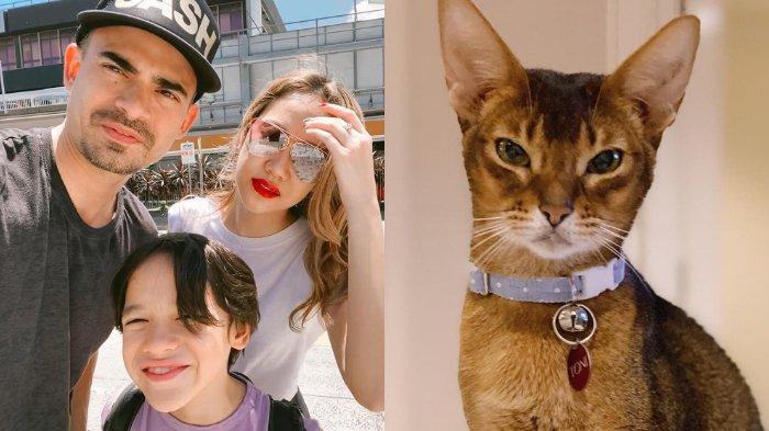 Setelah Ashraf Bcl Dan Noah Harus Rela Kehilangan Kucing Kesayangan Sampaikan Cinta Kami Ke Daddy Tribunnews Com Mobile