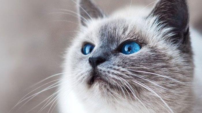 Viral Video Seorang Pria Makan Kucing Hidup, Polisi di Kemayoran Cari Pelakunya