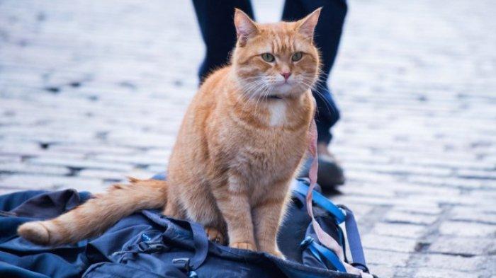 Kucing yang Ditahan atas Dugaan Penyelundupan Narkoba di Sri Lanka Berhasil Kabur