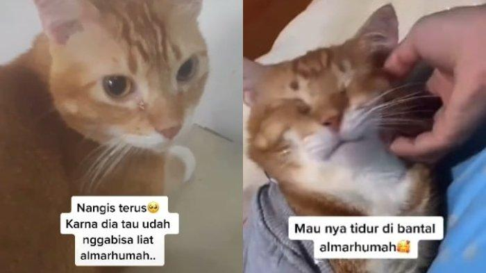 Kucing Oren Ini Menangis setelah Pemiliknya Tiada, Kini Masih Sedih dan Tidur di Kamar sang Pemilik