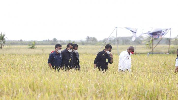 Ekonom INDEF: Sektor Pertanian Adalah Bantalan Resesi