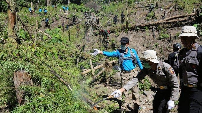BNN Temukan Dua Titik Ladang Ganja di Indrapuri Kabupaten Aceh Besar
