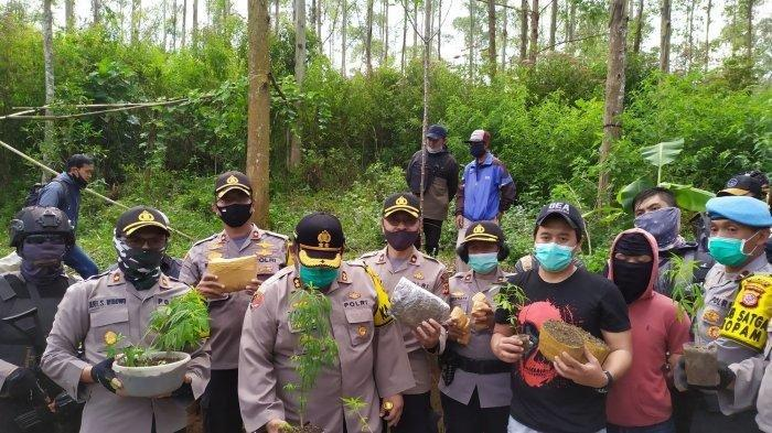 Satuan Reserse Narkoba Polres Cimahi berhasil mengungkap satu hektare ladang ganja di perbatasan Desa Cipanjalu, Kecamatan Cilengkrang, Kabupaten Bandung dengan Desa Suntenjaya, Kecamatan Lembang, Kabupaten Bandung Barat (KBB).