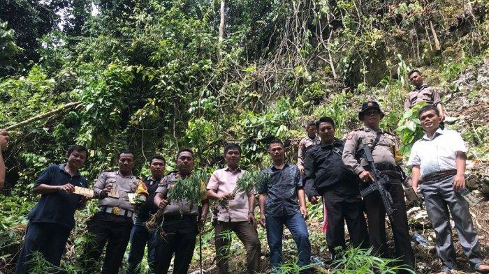 Penanam Tebar Ranjau Paku di Ladang, Dua Anggota Polisi Jadi Korban