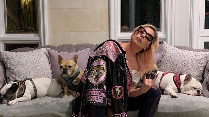 Penuntun Anjing Lady Gaga Ditembak dan 2 Buldognya Dicuri, sang Penyanyi Tawarkan Uang Rp 7 Miliar