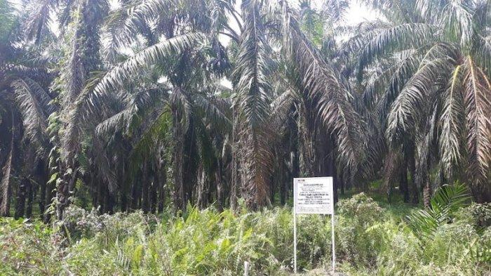 Lahan kebun kelapa sawit yang diduga dimiliki mantan Sekretaris MA Nurhadi telah disita KPK.