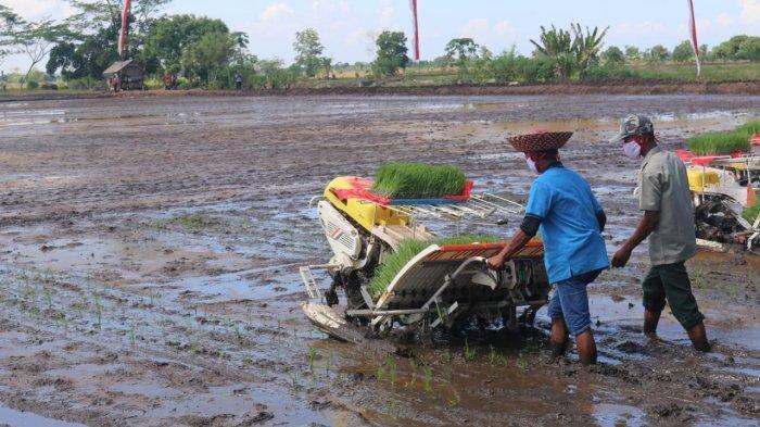 BPS: Sektor Pertanian Tumbuh Positif 2,59 Persen di Kuartal ke IV
