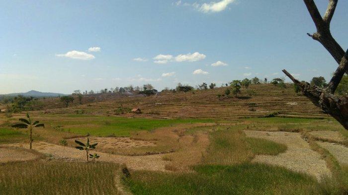 Ilustrasi lahan yang mengalami kekeringan.