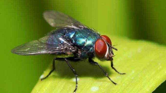 3 Cara Mudah Mengusir Lalat: Gunakan Perangkap dari Botol Bekas hingga Kemangi