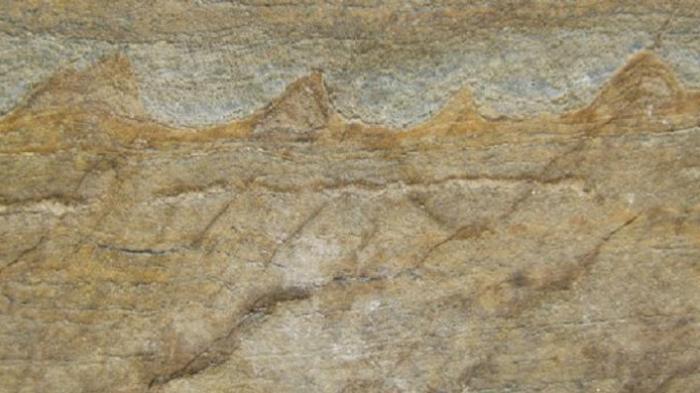 Ditemukan Fosil Berusia 3 Miliar Tahun, Inikah Makhluk Pertama di Bumi?