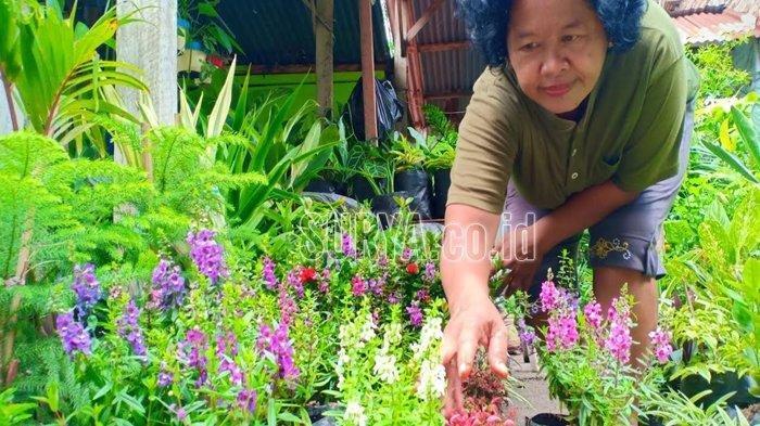 Supatmi menunjukkan bunga lavender, yang dipercaya dapat mengusir nyamuk.